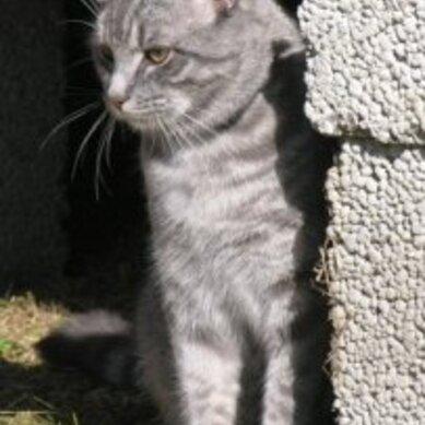 Norges peneste katt