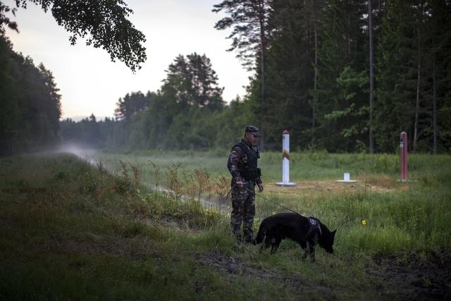 En litauisk grensevakt kontrollerer skogsområdene ved grensen mot Hviterussland. Foto: AP / NTB