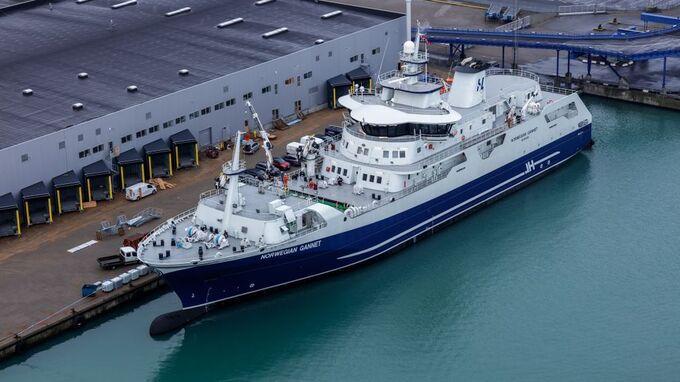 Forretningsmodellen til «Norwegian Gannet» er å hente laks i merdene, slakte om bord og levere den til mottak i Danmark.