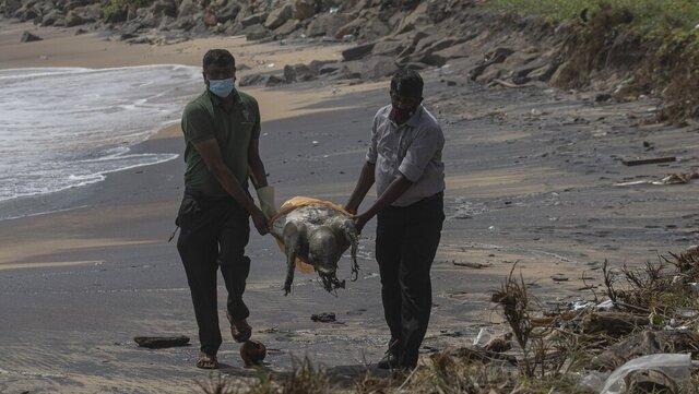 Rundt hundre døde skilpadder har drevet i land med skader etter skipsbrannen utenfor Sri Lanka.