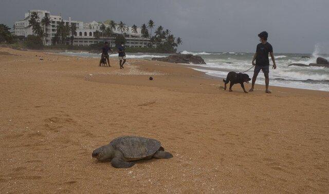 En gutt går tur med en hund ved en død skilpadde utenfor Colombo på Sri Lanka. Foto: Eranga Jayawardena / AP / NTB
