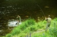 Skyldes det gode laksefisket fang og slipp?