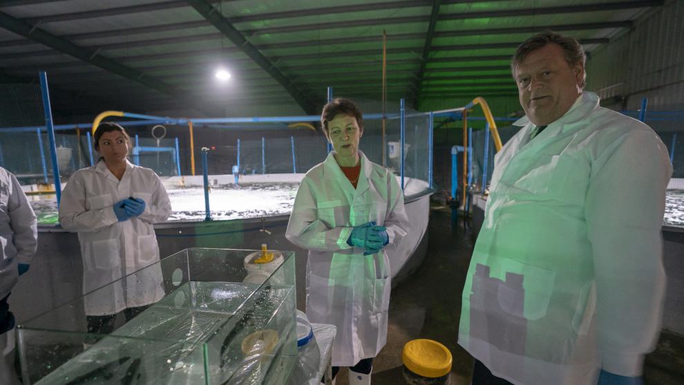 <p><b>I CHILE:</b> Fiskeriminister Harald T. Nesvik og Lise Bergan, kommunikasjonsdirektør i Cermaq, ser på laksesmolt under et besøk på Cermaq sitt smoltanlegg i Punta Arenas.</p>