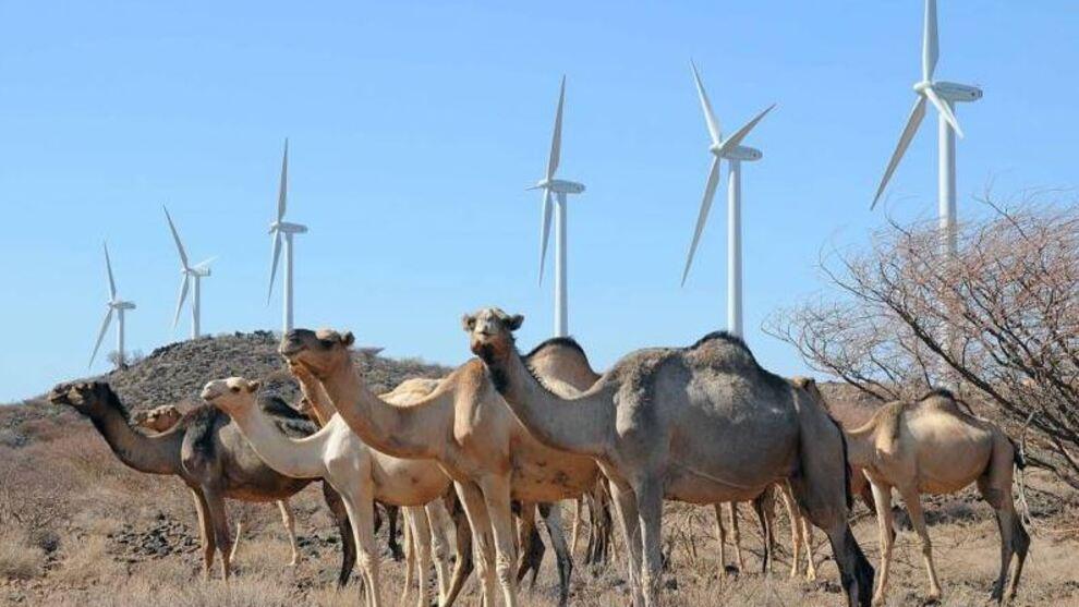 """<p><b>TRENGER KRAFT:</b>NHO og Zero ønsker statlige garantier slik at norske bedrifter kan bygge ut ren energi i u-land. Disse kamelene står foran vindparken Lake Turkana i Kenya, som det har tatt lang tid å bygge ut, men hvor <a href=""""https://www.wsj.com/articles/google-to-buy-stake-in-africas-biggest-wind-project-1445353313"""" class="""""""">Google nå er blant eierne</a>. De 365 turbinene på til sammen 310 megawatt vil utgjøre 15 prosent av landets installerte strømkapasitet.</p>"""