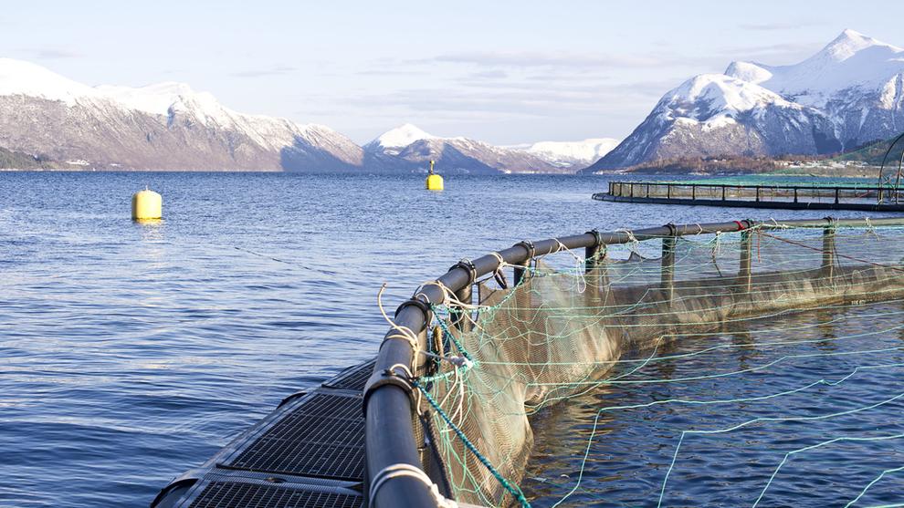 <p><b>LAKSESKATT:</b> Regjeringen vil utrede og eventuelt foreslå en grunnrenteskatt på havbruk. Her fra et av Mowis anlegg.</p>