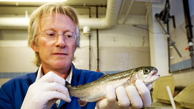 <p>FORKLARER SITUASJONEN: Professor i akvamedisin ved NMBU, Øystein Evensen.</p>