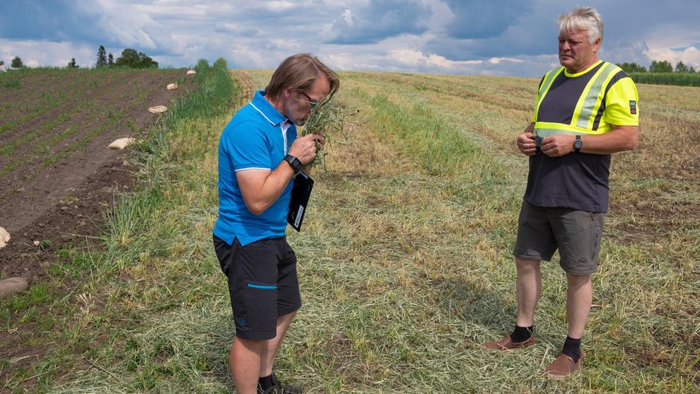 <p><b>EKSTREMTØRKE</b>: Bonden Bjørn Sætren har måttet slå mye gress til dyrefôr som følge av tørken. Nå håper han at han ikke skal komme til det punktet hvor han må slakte dyrene som følge av fôrmangel.</p>
