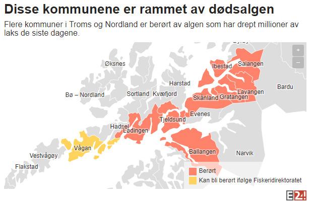<p><b>STORE OMRÅDER:</b> Kart over hvilke kommuner som er berørt av algeinvasjonen per 22. mai 2019. De røde kommunene har anlegg eller selskaper som er berørt av dødsalgen, mens gule områder står i fare for å bli rammet.</p>