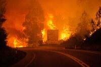 Skogbrannen i Portugal: «En av de største tragediene på flere år»