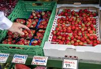 Slapp av, det er mer enn nok jordbær i butikken