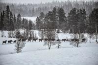 Sjekk Bengts (68) blinkskudd: Tok bilde av 17 elger