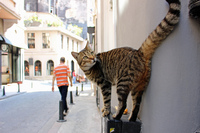 Istanbuls kattepine: Har én million gatedyr
