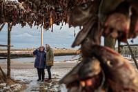 Fisker etter stemmer i Lofoten: Slik vil de stoppe konsekvensutredning