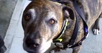 Bank slo terroralarm – trodde hunden Dash var fra IS