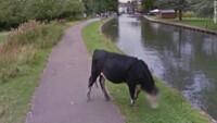 Google Street View sladdet ku