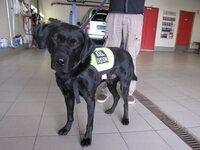 Narkotikahunden Sniff snuste opp nesten syv kilo amfetamin
