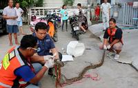 Thailandsk mann bitt i penis av pytonslange mens han satt på do